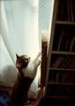 necobitter『日めくり猫ら』まとめ 2011年4月分klasse s_5