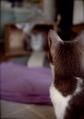 necobitter『日めくり猫ら』まとめ 2011年4月分klasse s_6
