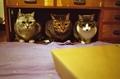 necobitter『日めくり猫ら』まとめ 2011年4月分klasse s_7