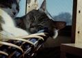 necobitter『日めくり猫ら』まとめ 2011年4月分klasse s_8
