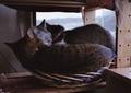 necobitter『日めくり猫ら』まとめ 2011年4月分klasse s_10