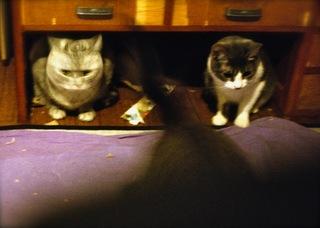 日めくり猫ら番外編・その他らくがき写真まとめ 2011年4月分1