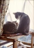 necobitter『日めくり猫ら』まとめ 2011年4月分pen f