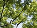 E-520 百草園の緑