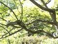 百草園生き物1