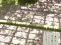 百草園生き物6