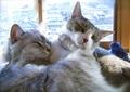 necobitter『日めくり猫ら』まとめ 2011年5月分agfa830s_2