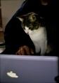 necobitter『日めくり猫ら』まとめ 2011年5月分agfa830s_3