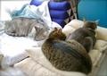 necobitter『日めくり猫ら』まとめ 2011年5月分agfa830s_4