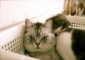 necobitter『日めくり猫ら』まとめ 2011年5月分agfa830s_6