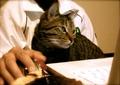necobitter『日めくり猫ら』まとめ 2011年5月分agfa830s_7