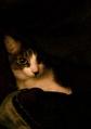 necobitter『日めくり猫ら』まとめ 2011年5月分agfa830s_9