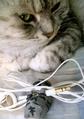 necobitter『日めくり猫ら』まとめ 2011年5月分agfa830s_10
