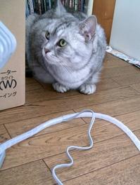 猫のコードかじり阻止グッズ、3種の使い分け1