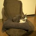 necobitter『日めくり猫ら』まとめ 2011年5月分e520_2