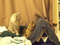 necobitter『日めくり猫ら』まとめ 2011年5月分e520_3
