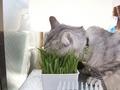 necobitter『日めくり猫ら』まとめ 2011年5月分e520_4