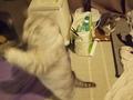 necobitter『日めくり猫ら』まとめ 2011年5月分e520_5