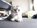 necobitter『日めくり猫ら』まとめ 2011年5月分e520_6