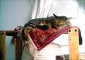necobitter『日めくり猫ら』まとめ 2011年5月分izone550_1
