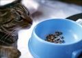 necobitter『日めくり猫ら』まとめ 2011年5月分klasses_2