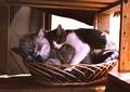 necobitter『日めくり猫ら』まとめ 2011年5月分klasses_4