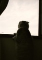necobitter『日めくり猫ら』まとめ 2011年5月分klasses_8