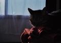 necobitter『日めくり猫ら』まとめ 2011年5月分klasses_9