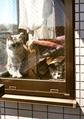 necobitter『日めくり猫ら』まとめ 2011年5月分klasses_11