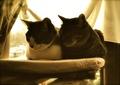 necobitter『日めくり猫ら』まとめ 2011年5月分klasses_12