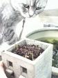日めくり猫ら番外編・その他らくがき写真まとめ 2011年5月分2