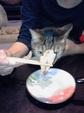 日めくり猫ら番外編・その他らくがき写真まとめ 2011年5月分9