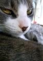 necobitter『日めくり猫ら』まとめ 2011年6月分agfa_830s_1