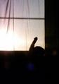 necobitter『日めくり猫ら』まとめ 2011年6月分agfa_830s_2