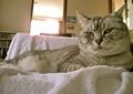 necobitter『日めくり猫ら』まとめ 2011年6月分agfa_830s_3