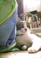 necobitter『日めくり猫ら』まとめ 2011年6月分agfa_830s_4