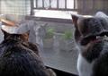 necobitter『日めくり猫ら』まとめ 2011年6月分agfa_830s_6