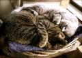 necobitter『日めくり猫ら』まとめ 2011年6月分agfa_830s_7