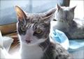 necobitter『日めくり猫ら』まとめ 2011年6月分agfa_830s_8
