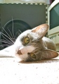 necobitter『日めくり猫ら』まとめ 2011年6月分agfa_830s_10