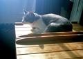 necobitter『日めくり猫ら』まとめ 2011年6月分polaroid_a520_1
