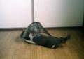 necobitter『日めくり猫ら』まとめ 2011年6月分polaroid_a520_2