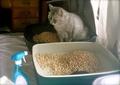necobitter『日めくり猫ら』まとめ 2011年6月分polaroid_a520_3