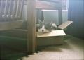 necobitter『日めくり猫ら』まとめ 2011年6月分polaroid_a520_4