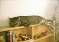 necobitter『日めくり猫ら』まとめ 2011年6月分polaroid_a520_8