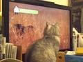 necobitter『日めくり猫ら』まとめ 2011年6月分olympus_e-520_