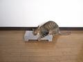 necobitter『日めくり猫ら』まとめ 2011年6月分olympus_e-520_3