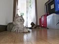 necobitter『日めくり猫ら』まとめ 2011年6月分olympus_e-520_4