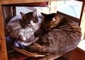 necobitter『日めくり猫ら』まとめ 2011年6月分klasse_s_1
