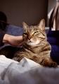 necobitter『日めくり猫ら』まとめ 2011年6月分klasse_s_2